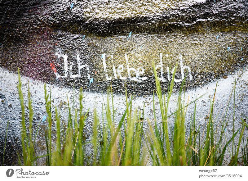 Hinter grünen Gras steht mit weißer Farbe ich liebe dich an einer mit Graffiti bemalten Wand geschrieben grünes Gras Schrift Liebe weiße Farbe Mauer Gefühle