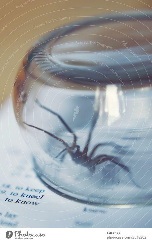 spinne in einem glas gefangen Spinne eklig Phobie gruselig Arachnophobie Spinnentier Spinnenbeine Angst Ekel krabbeln bedrohlich