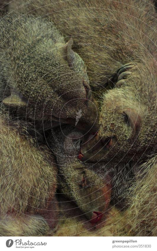 Schmusen - Gruppenkuscheln - Mangustenfamilie Liebe Freundschaft Familie & Verwandtschaft Zusammensein schlafen Warmherzigkeit Tiergruppe Fell Team Tiergesicht
