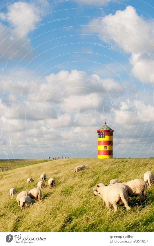 Schafe am Ottoturm - Pilsumer Leuchtturm Natur Landschaft Wolken Küste Seeufer Strand Nordsee Ostsee Meer Nutztier Herde Erholung Freiheit Horizont Ostfriesland