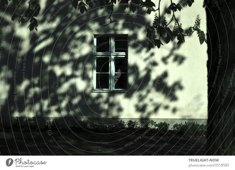 Teilansicht einer sanierten Hauswand mit Fenster, vom Sonnenlicht angestrahlt, auf die ein blühender alter Kastanienbaum ein lebendiges Schatten Gemälde wirft