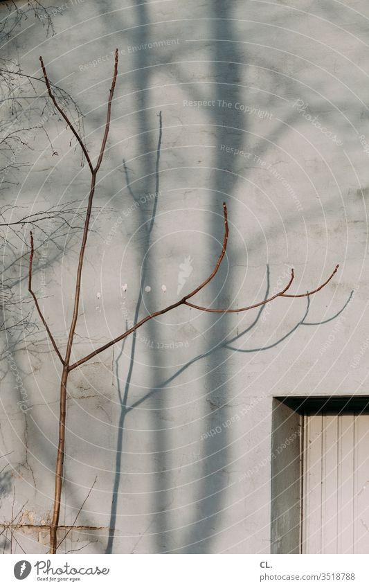 zweig und wand Zweig Zweige u. Äste Wand grau trist Tristesse karg Fenster Ast ästhetisch Herbst Schatten Baum Mauer Außenaufnahme Menschenleer Farbfoto Tag