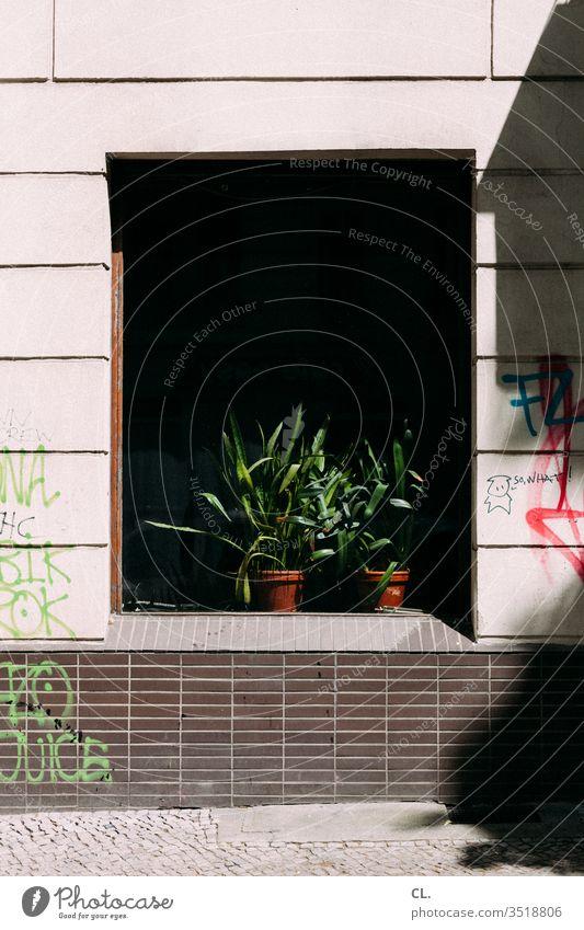 so what Pflanze Topfpflanze Fenster Graffiti Wand urban Dekoration & Verzierung trist Grünpflanze Zimmerpflanze Blumentopf Farbe Schmiererei dreckig Stadt