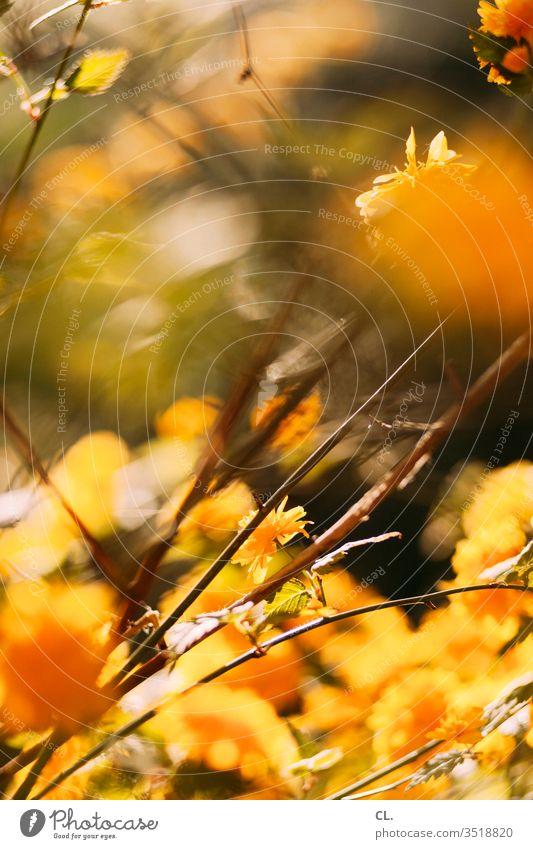 frühlingsblüte Frühling blühen gelb blühender baum Baum Natur Blüte Blühend Ast Frühlingsgefühle ästhetisch Schönes Wetter Tag Park Zweig Menschenleer