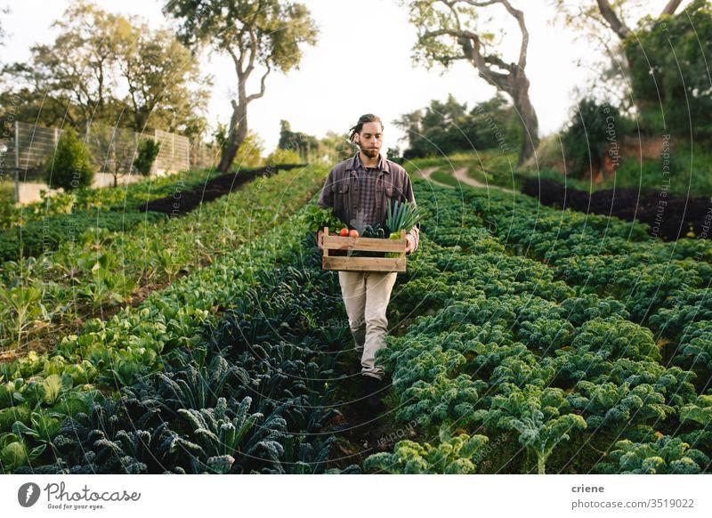 Junglandwirt bei der Feldernte von Gemüse Kale Salatbeilage Business Landwirtschaft Kasten kultivieren Frische Gärtner Männer arbeiten Ernten Beruf Umwelt