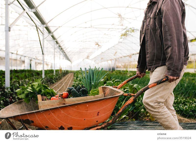 Landwirt arbeitet in Gewächshaus-Schubkarre Kasten Kiste nachhaltig produzieren frisch Garten Natur grün Ernte organisch Bauernhof Ackerbau Gemüse Gesundheit