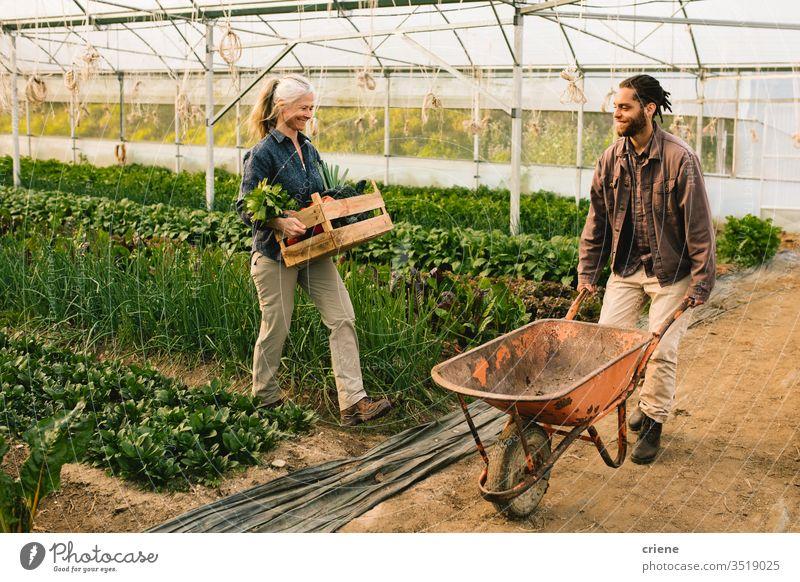 Zwei Landarbeiter laden Gemüse auf Schubkarre Kasten Kiste nachhaltig Frau produzieren frisch Garten Landwirt Natur grün Ernte organisch Mann Bauernhof Ackerbau
