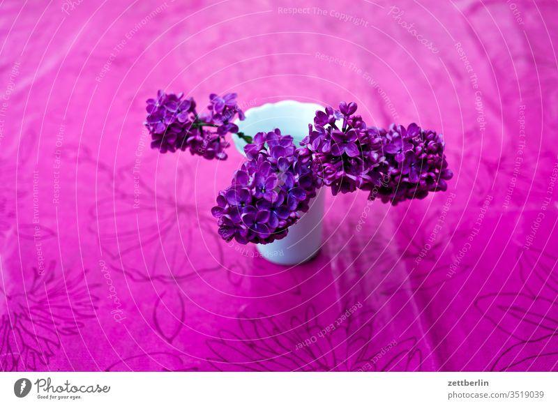 Fliederblüten blume flieder fliederblüte strauß blumenstrauß blühen garten menschenleer natur pflanze ruhe schrebergarten strauch textfreiraum tiefenschärfe