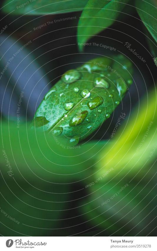 Wassertropfen auf grüner Pflanze grüne Pflanze Blattgrün Nahaufnahme Makro Damp Grünpflanze Tau Natur nass Makroaufnahme Regentropfen Detailaufnahme Botanik