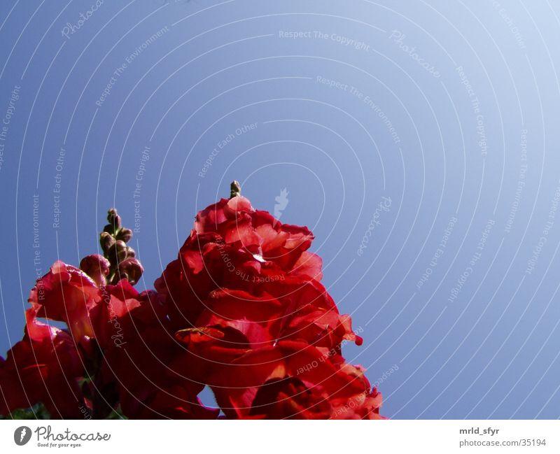 reaching for the sky Himmel Blume rosa