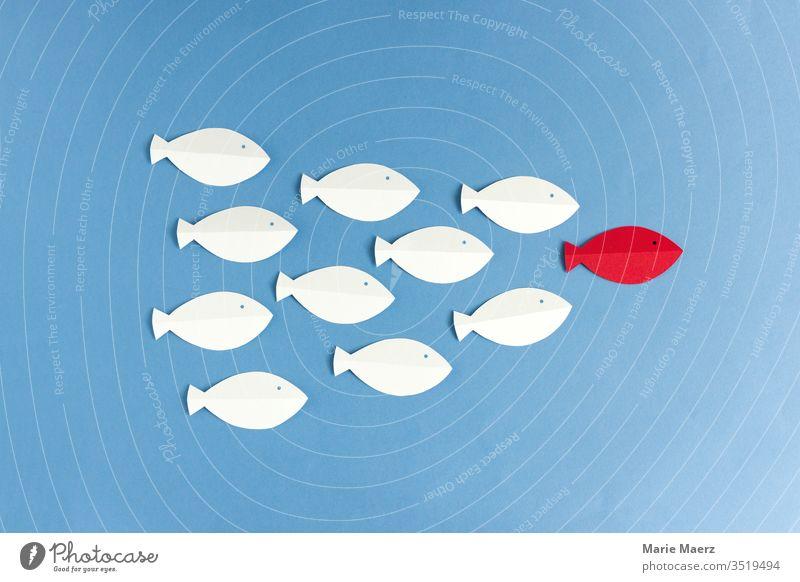 Weiße Fische folgen rotem Fisch Grafik u. Illustration Team Business Führung Führungskraft Ziel Erfolg Farbfoto Kraft Papierschnitt abstrakt Silhouette