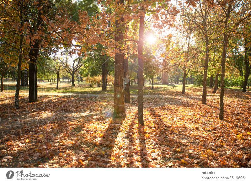leerer Stadtpark ohne Menschen an einem Herbsttag urban Menschenleer niemand gold Hintergrund schön Schönheit Unschärfe Bokeh Ast hell Farbe farbenfroh