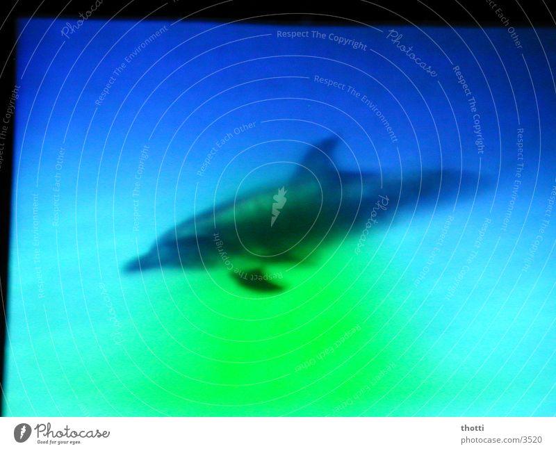 Flipper Delphine grün Meer Verkehr blau Unterwasseraufnahme
