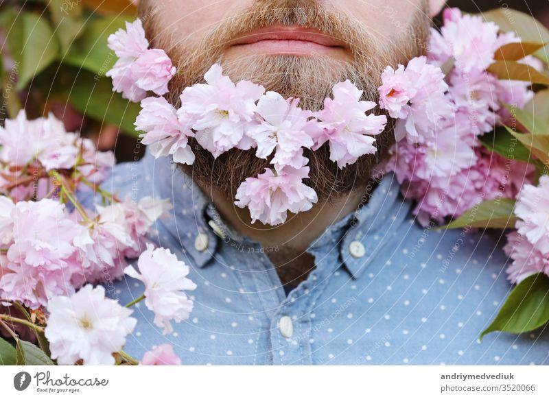 Haut- und Haarpflegekonzept. Bärtiges männliches Gesicht, das aus der Blüte der Sakura hervorschaut. Hipster mit Sakura-Blüte im Bart. Mann mit Bart und Schnurrbart auf fröhlichem Gesicht in der Nähe von zartrosa Blüten, Nahaufnahme.