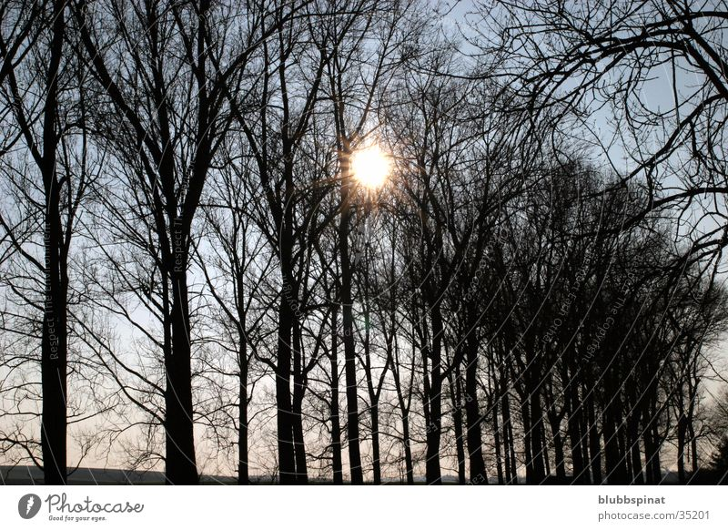 Dark Trees Baum Sonne dunkel Weste