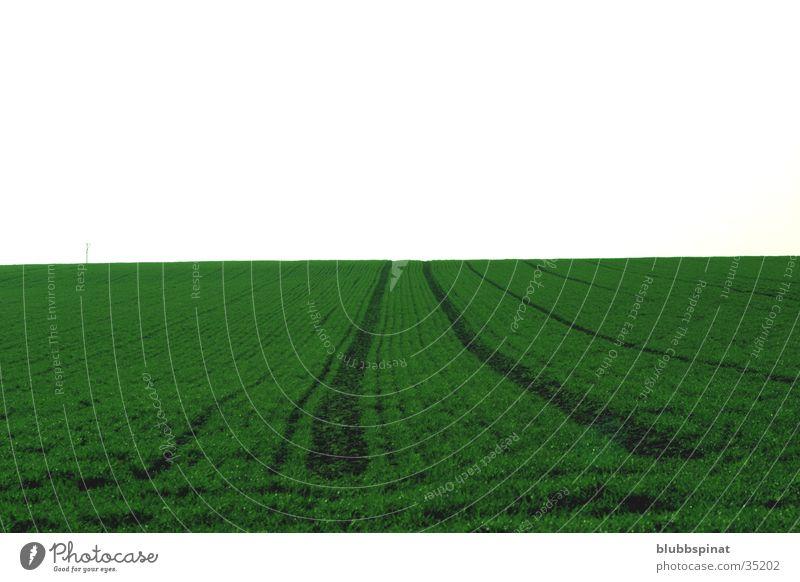 Green Horizon grün Feld Horizont Spuren Wiese