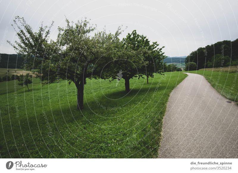 Waldspaziergang Obstbaum Baum Wiese grün Außenaufnahme Natur Landschaft Gras Himmel Umwelt Pflanze Menschenleer Farbfoto Tag Nutzpflanze Weg spazieren wandern