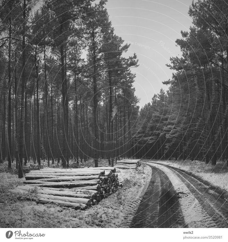 Bestellt und nicht abgeholt Wald Winter Schnee düster dunkel Bäume Nadelbäume Weg Waldweg Fahrspuren Reifenspuren Stapel Baumstämme Holzstapel warten liegen