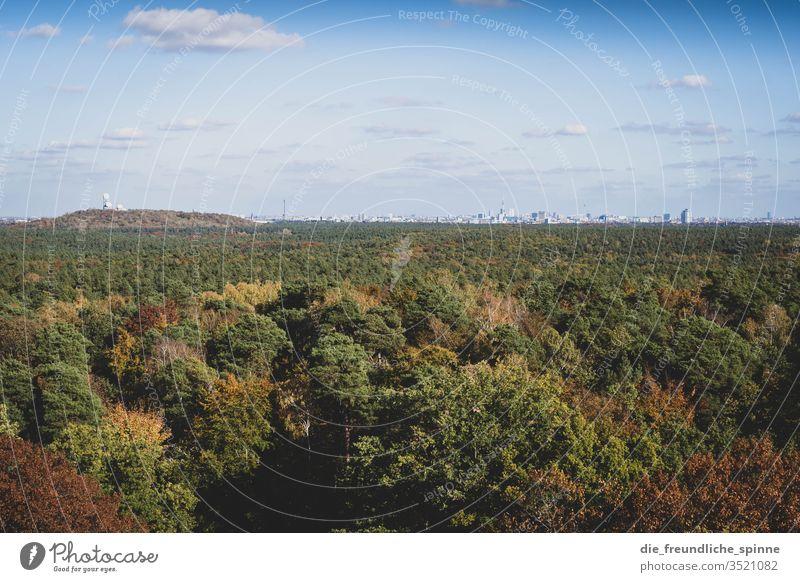 Grunewald mit Blick auf Berlin Wald Aussicht Teufelsberg Skyline Außenaufnahme Himmel Menschenleer Panorama (Aussicht) Sonnenlicht Farbfoto Schönes Wetter Licht