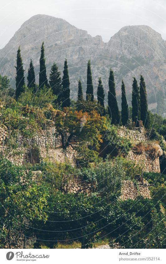 Chart Natur Sommer Pflanze Baum Landschaft ruhig Berge u. Gebirge Idylle wandern Insel Hügel Sehenswürdigkeit Grünpflanze Mallorca Balearen