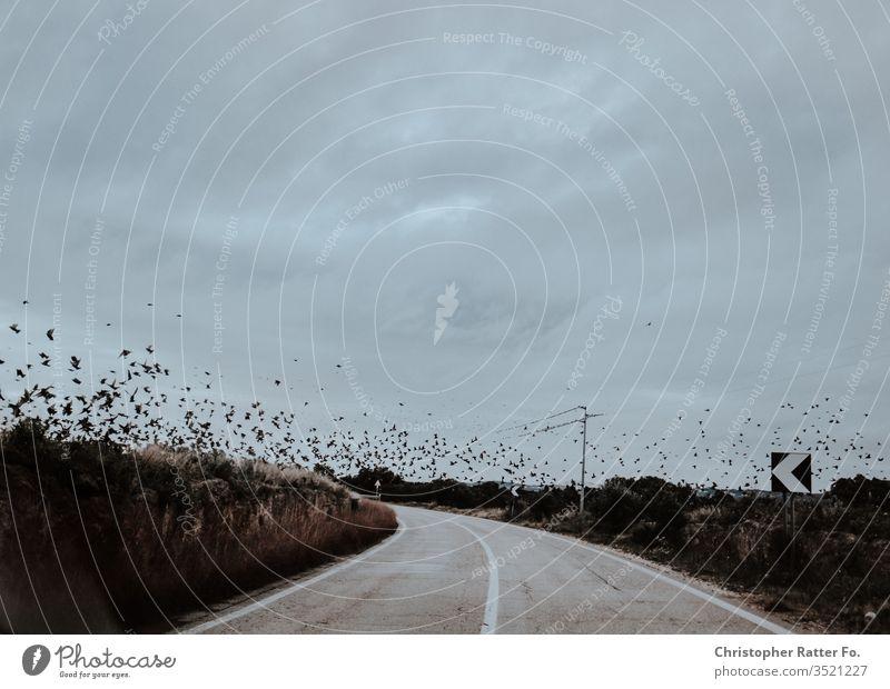 Vögel fliegen über eine leere Straße in Süditalien Reise bari Brindisi italienisch matera Winter xt2 orange Italienisch Landschaft Dolce Vita Reisefotografie