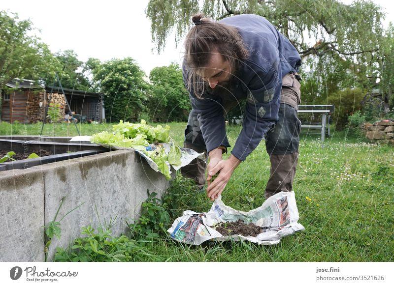 Salatsetzlinge pflanzen gärtnern Garten Junger Mann hochbeet Pflanzen Gemüse grün frisch Gesunde Ernährung Eigenanbau Natur Bioprodukte Gärtner Arbeitskleidung