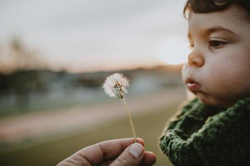 Kind bläst Löwenzahn Kaukasier Lifestyle Leben Kindheit Glück Außenaufnahme Fröhlichkeit Natur niedlich Freude Spielen heiter Porträt Ausdruck reizvoll Menschen
