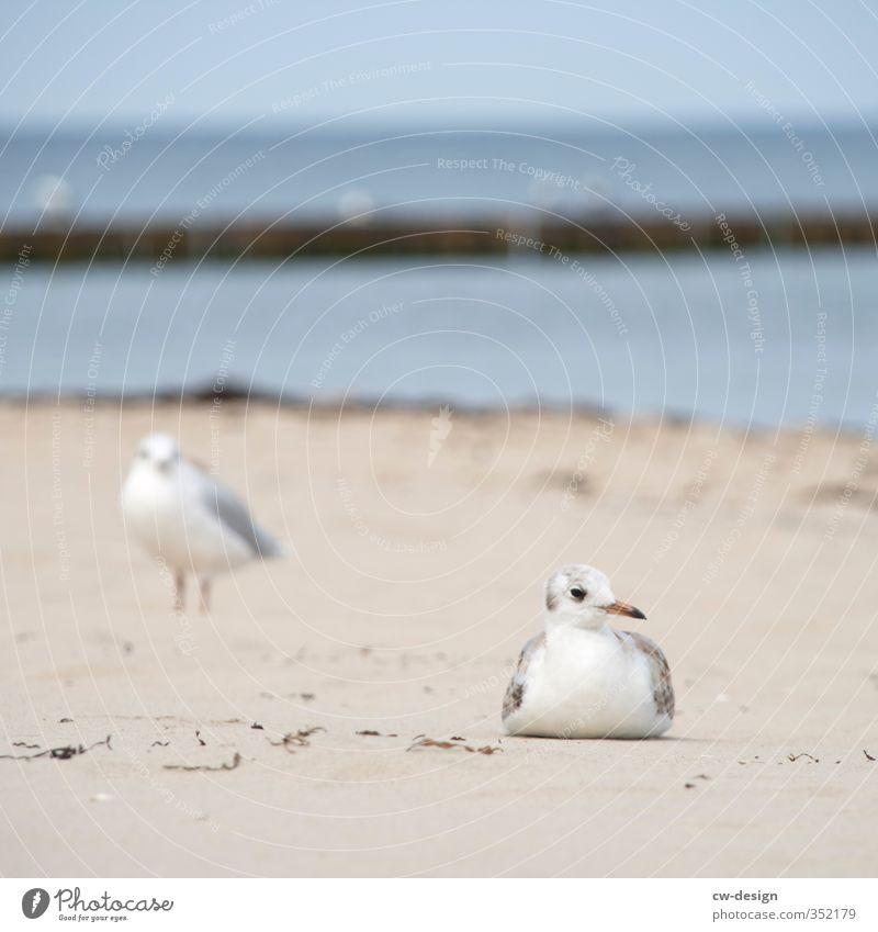 HEUTE: TAG DES MEERES Natur Sommer Meer Landschaft ruhig Tier Strand Küste Sand See Vogel sitzen stehen Insel Schönes Wetter Seeufer