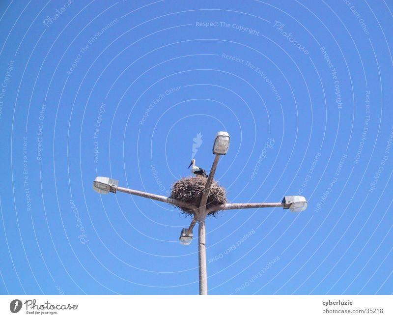 Wenn man nicht mehr weiß wohin... Himmel blau Lampe Laterne Nest Storch
