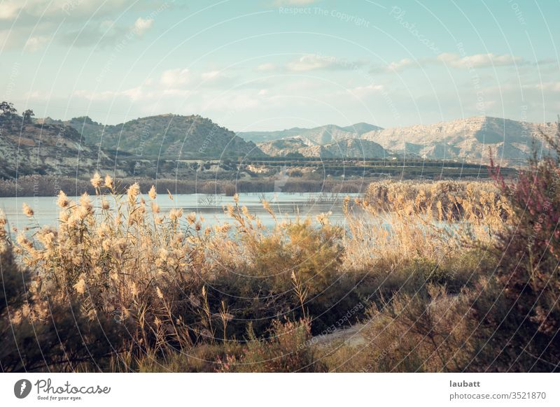 Herbstliche Landschaft mit Grün an einem See - Hügel am Sumpf - Elche, Alicante, Spanien - Sommerlandschaften der Mittelmeerregion - Landschaft der Region Valencia