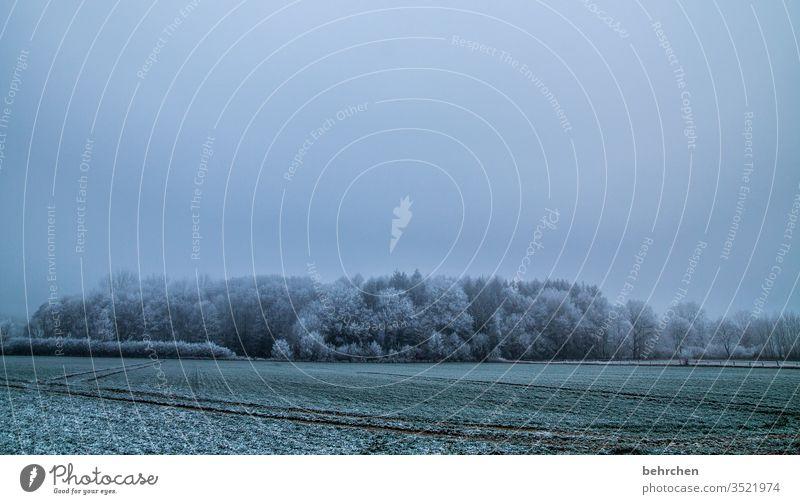 winterträume Winterspaziergang Wintertag Winterstimmung Winterwald geheimnisvoll Märchenhaft Märchenwald Deutschland Heimat Acker Landwirtschaft wolkenverhangen