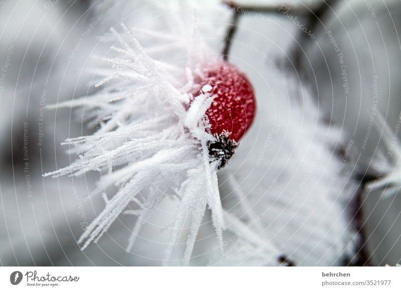 winterpoesie Pflanze Eis Winter Wald Schnee Frost Natur Umwelt Herbst kalt Kälte frieren gefroren Außenaufnahme Farbfoto Menschenleer Baum Raureif Jahreszeiten