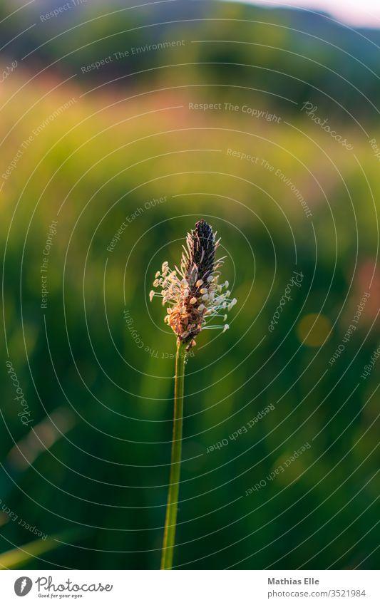 Blütenzweig im Graß Gras Frühling Pflanze Natur Sträucher Garten Blühend Wachstum Farbe Umwelt Farbfoto Außenaufnahme Detailaufnahme Zentralperspektive