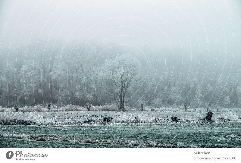 wintersinfonie Winterspaziergang Wintertag Winterstimmung Winterwald geheimnisvoll Märchenhaft Märchenwald Deutschland Heimat Acker Landwirtschaft