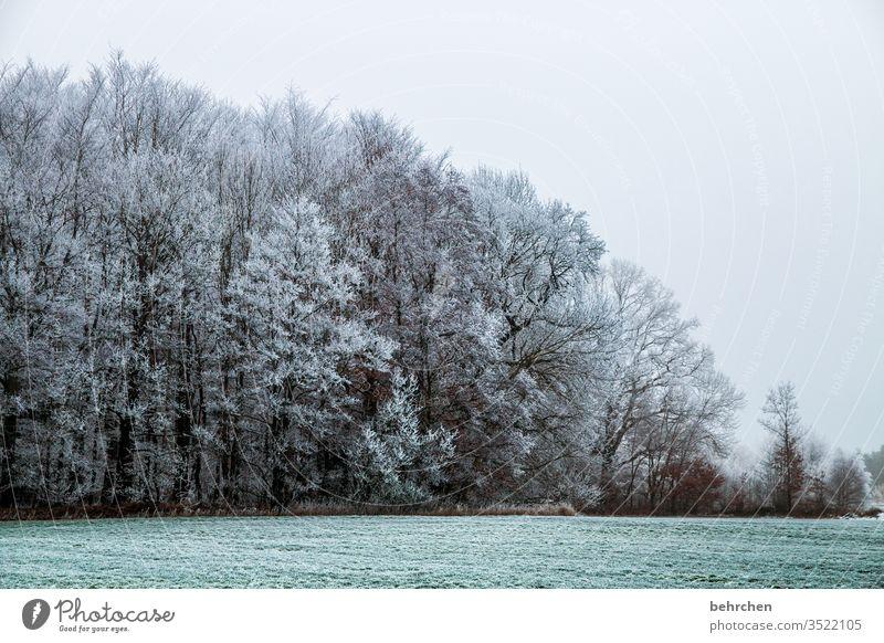 abkühlung Pflanze Schneelandschaft Eis Winter Wald Bäume Frost Landschaft Natur Umwelt Wiese Feld idyllisch verträumt schön Winterspaziergang Wintertag