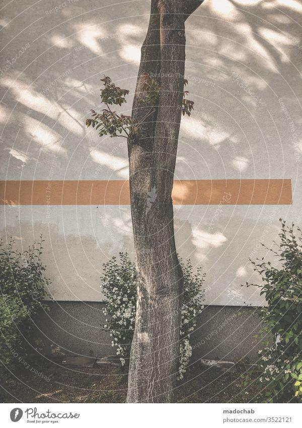 Heiliger Bimbam Baum natur urban Linie grafisch Gebüsch Strauch Fassade Stadt Wand Menschenleer Gedeckte Farben Außenaufnahme Farbfoto Muster