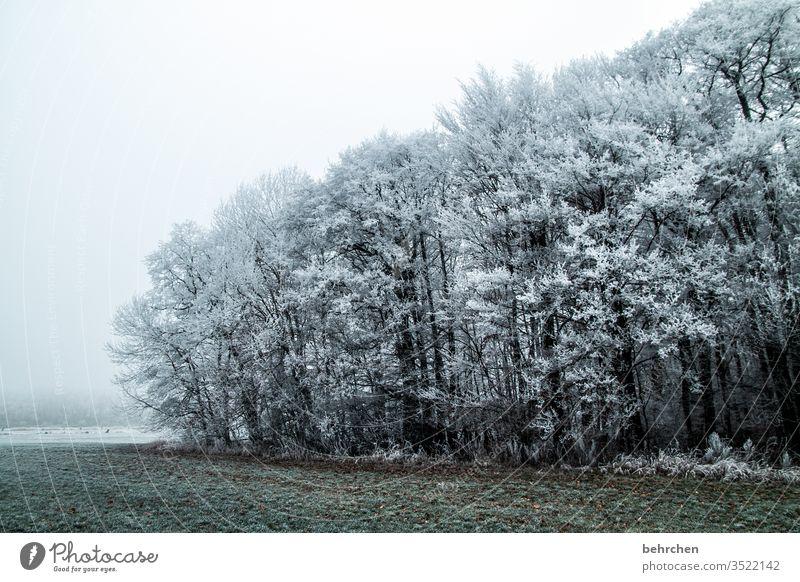eingefrorene zeit Winterwald Sonnenlicht Schneefall weiß ruhig Umwelt Natur Wiese Feld Wald Himmel Landschaft Frost Bäume Winterlandschaft kalt Kälte