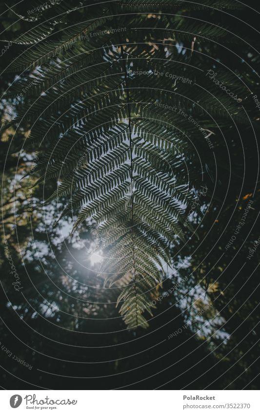 #AS# Farn Farnblatt Farne Strukturen & Formen grün Grünpflanze Schattenspiel wild Dschungel farnwuchs Farnblätter farntrieb Farnstengel Sonnenlicht Wildnis