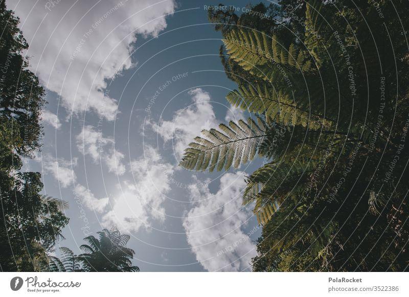 #AS# Farn Paradies Farnblatt Farne Strukturen & Formen grün Grünpflanze Schattenspiel wild Dschungel farnwuchs Farnblätter farntrieb Farnstengel Sonnenlicht