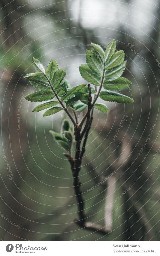 grüner Zweig mit Vintage Bokeh Pflanze Blatt Ast Baum Blattgrün Wachstum Frühling Baumstamm Natur Garten Zweige u. Äste Außenaufnahme Nahaufnahme Makroaufnahme