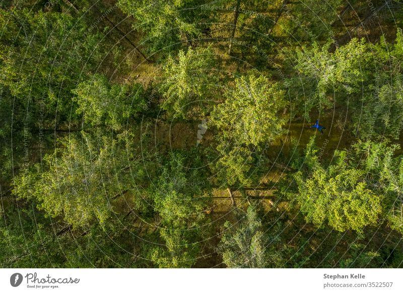 Vertikale Drohnenansicht am Gipfel eines grünen Waldes im Frühling, Vogelperspektive von oben. Hintergrund Baum Muster Sommer Textur Natur Sonne Blatt
