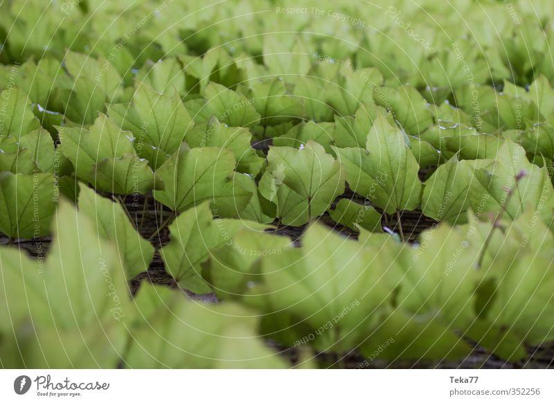 E f eu Umwelt Natur Klima Pflanze Efeu Blatt Grünpflanze Garten grün Gedeckte Farben Außenaufnahme Licht Schatten