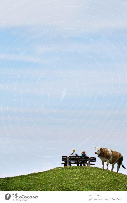 gestatten, ist hier noch frei? Urlauber Bank Kuh neugierig Wanderer Hügel Freizeit Pärchen Hörner Bankverbindung Mensch und Tier Wiese Außenaufnahme Strohhüte