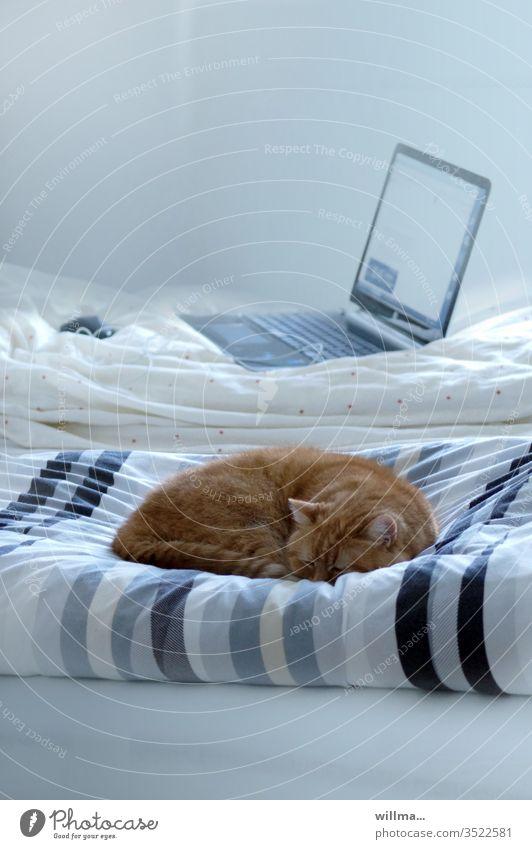 Home Office für Katz und Maus Zu Hause Bett Katze schlafen Laptop Computer