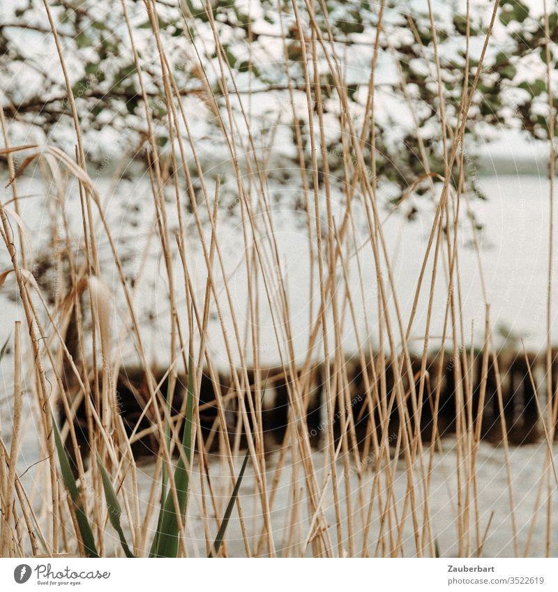 Blick durch Schilf auf einen See und Zweige Gras Ufer Baum Natur Wasser Melancholie Traum Träumerei Frühling Sommer Blätter Ausblick Landschaft