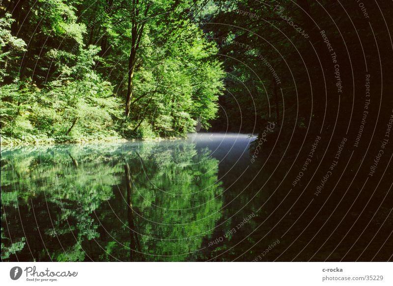 reflektion Wasser grün Nebel Fluss Spiegel Umweltschutz Quelle Kroatien ursprünglich
