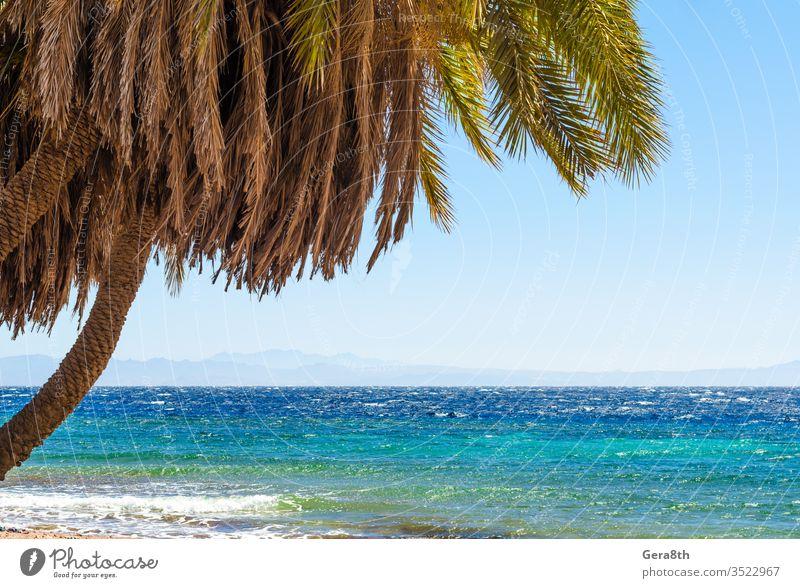 Palmen am Meer vor der Kulisse der Berge in Ägypten Dahab Süd-Sinai Rotes Meer Strand blau Blauwasser Niederlassungen klarer Tag Küste exotisch grün erwärmen