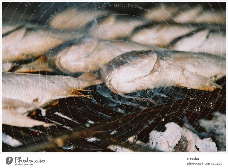 dead fish Tod Ernährung Rauch Grill anschaulich Kochen & Garen & Backen