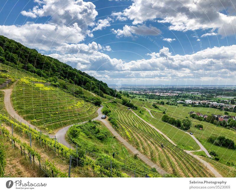 Wegen durch den Weinberg an einem sonnigen Sommertag mit Wolken Landschaft Baden-Württemberg Schriesheim Weinlese Farbfoto Weinbau Außenaufnahme Menschenleer