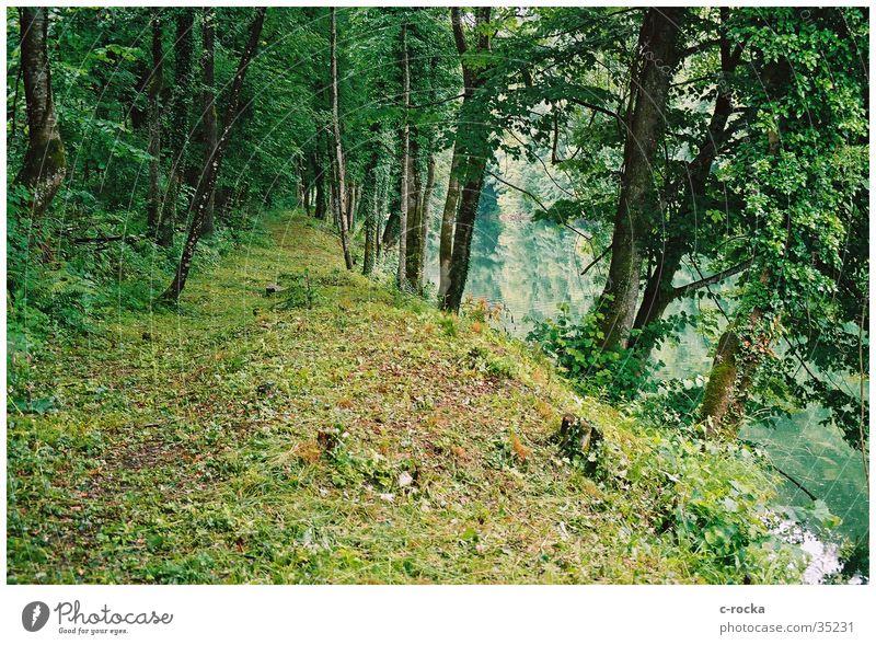 Green impressions Wasser grün ruhig Wald Fluss Kroatien ursprünglich